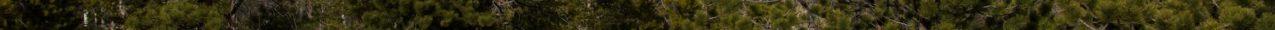Photo of evergreen trees