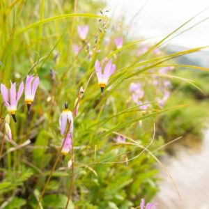 flowers on a riverside