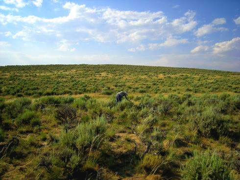 Green rangeland with blue sky and clouds