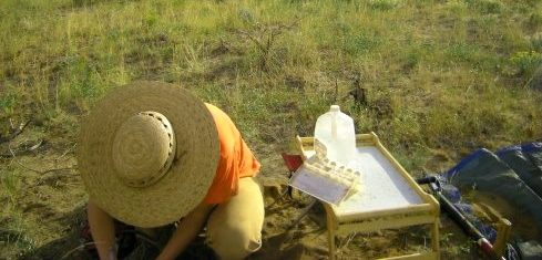 Researcher working in rangeland