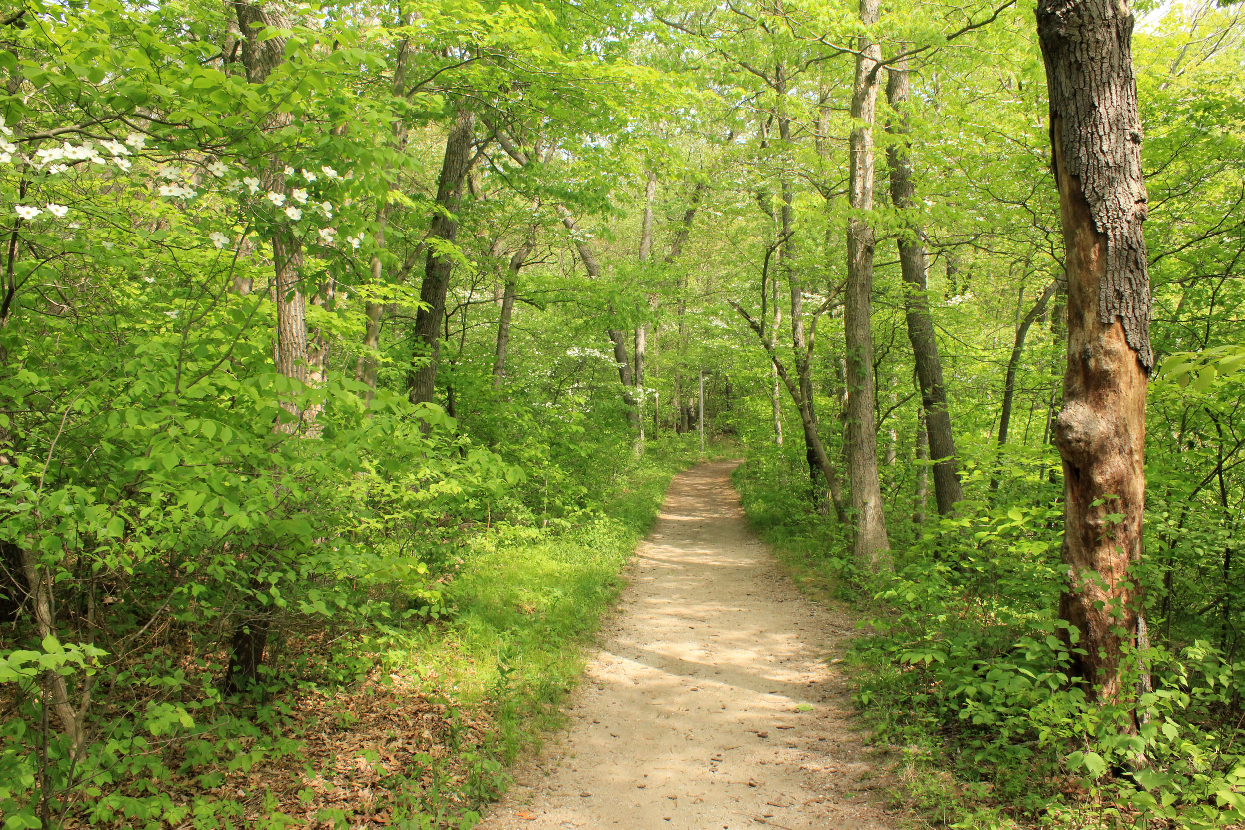 gfp-indiana-dunes-national-lakeshore-forest-trail-path - Warner