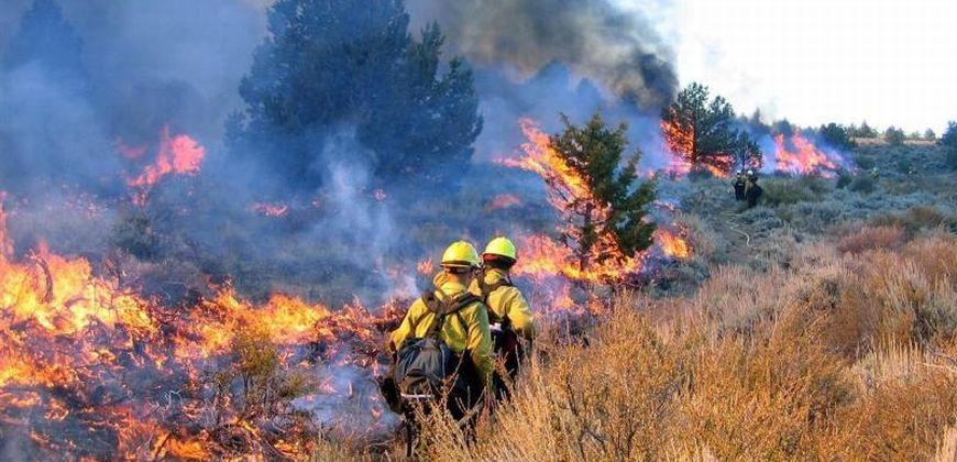 Wildland firefighters working on an active fire