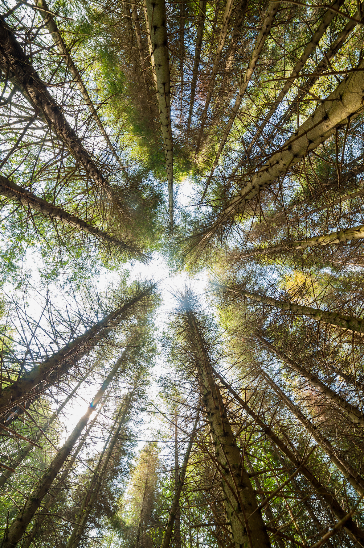 a looking up through the trees in a forest