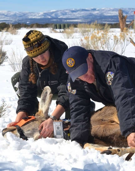 Photo of two people tagging an elk in the wilderness
