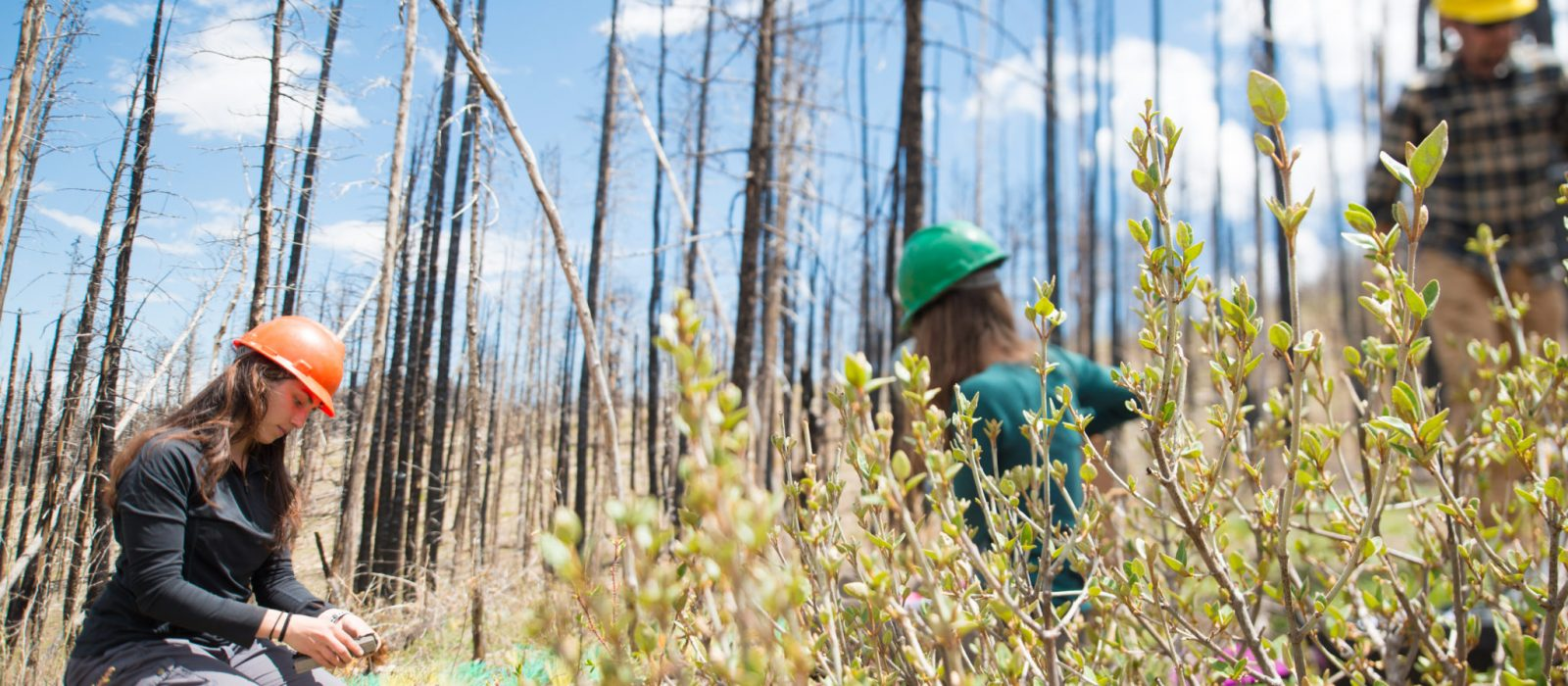 Colorado State University Warner College of Natural Resources students collect samples in the High Park Fire burn area as a part of Jayne Jonas-Bratten's research, June 1, 2016.