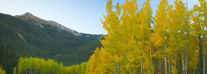 autumn aspens with a mountain