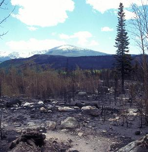 site of forest fire