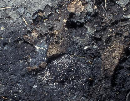 burned soil