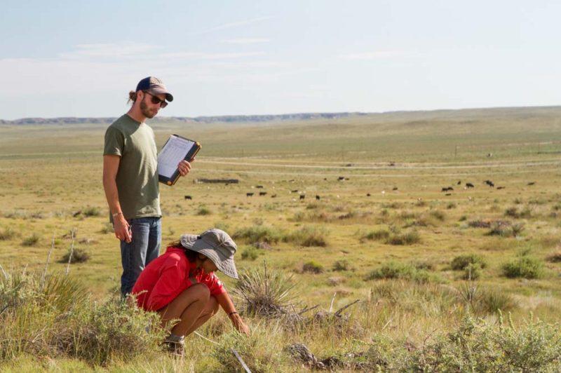 students working on a rangeland