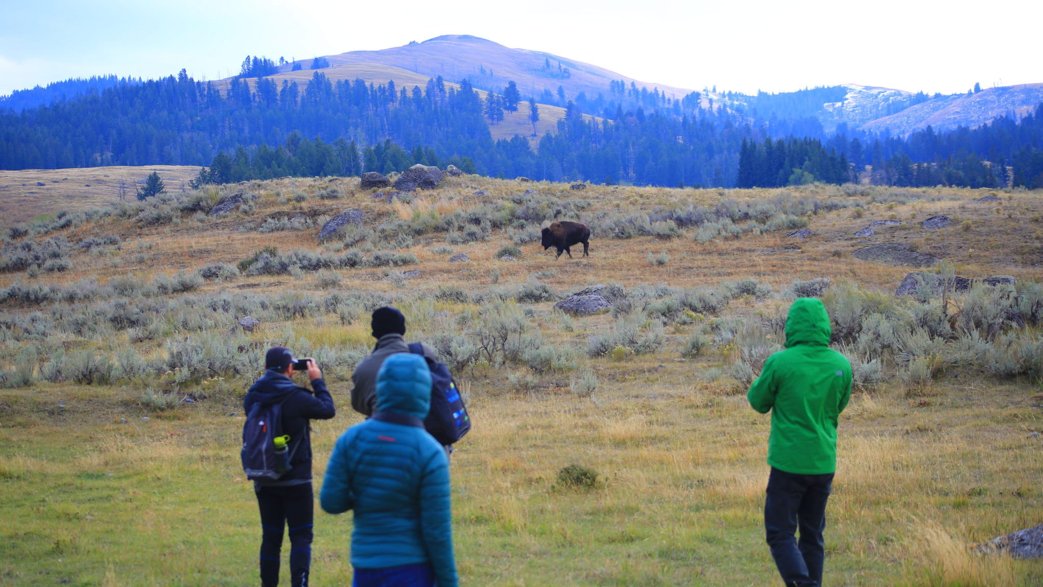 four people taking pictures of a lone buffalo in the mountains