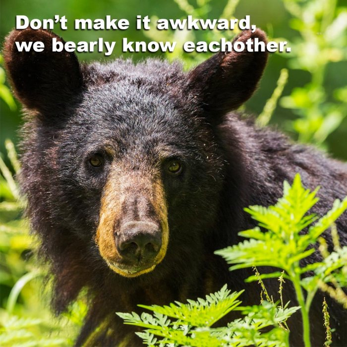 Picture of Bear saying, Don't Make this awkward, we barely know each other