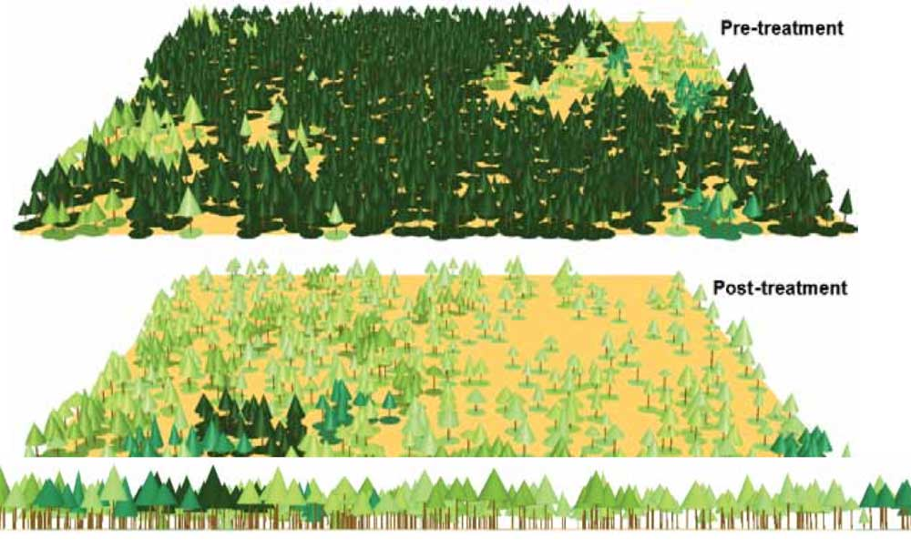 graphic of forest treatment