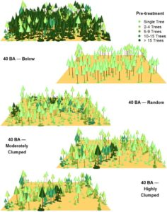 graphics of forest treatments