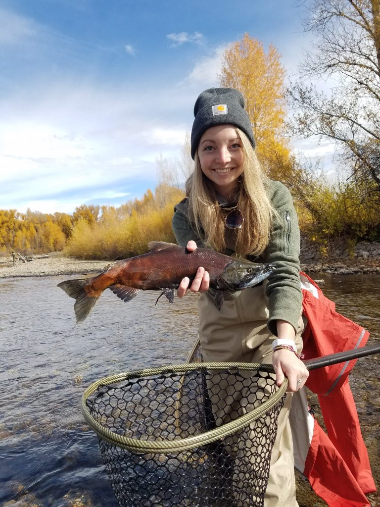 Kokanee Salmon, Gunnison River, Colorado