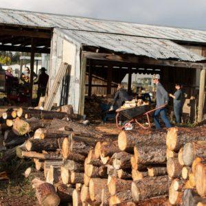 SAF Alpha cutting firewood