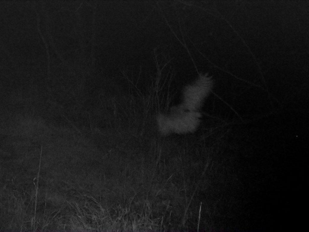 Bird flying at night