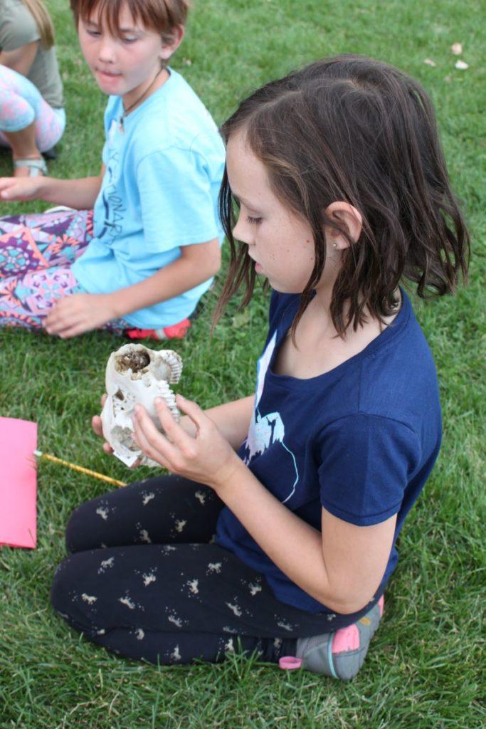 A child observes a skull specimen