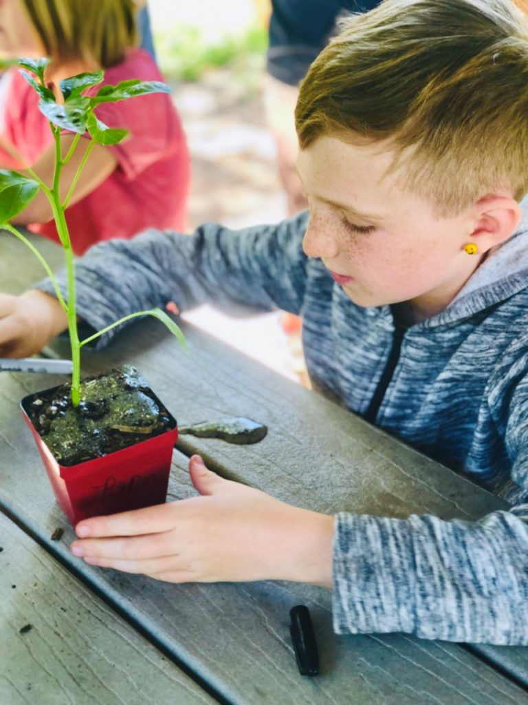 A child observes their plant project
