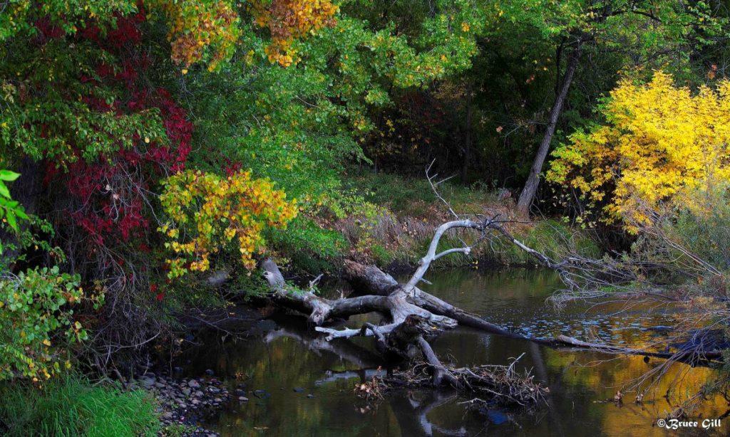 Cache la Poudre River; Photo courtesy of Bruce Gill