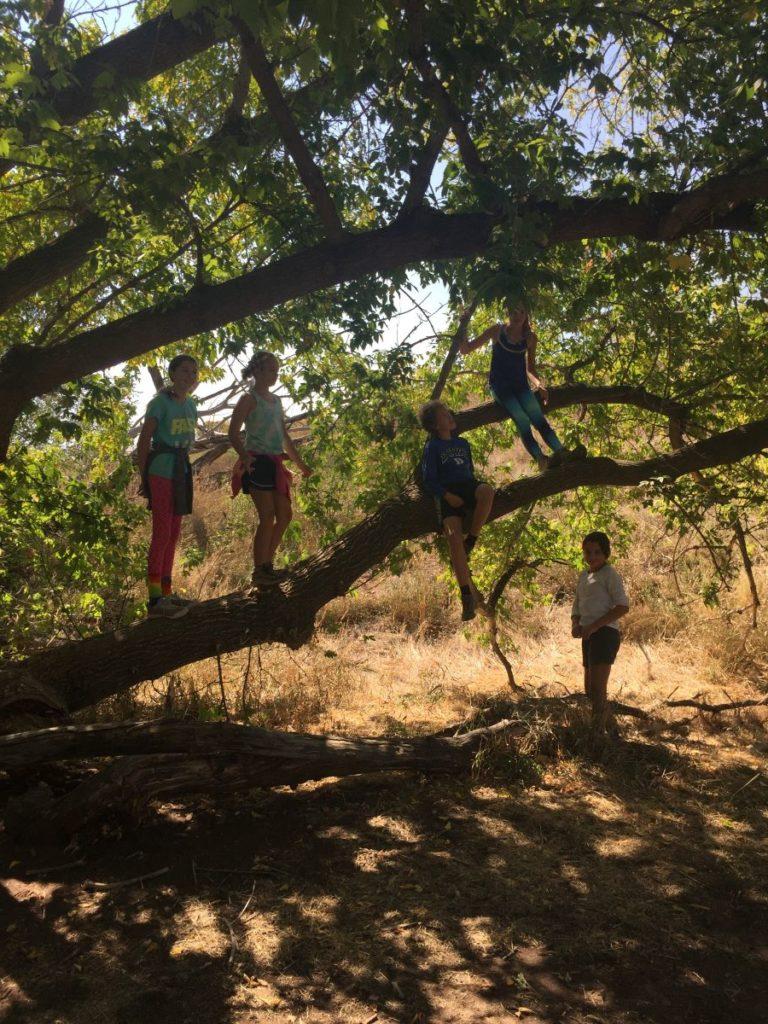 Kids climb in a tree