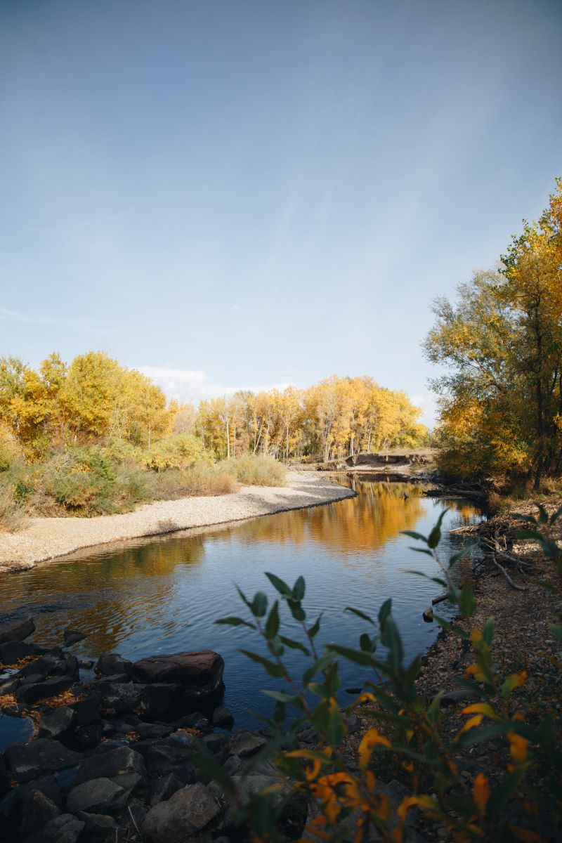 View of river looking downstream with cottonwood trees in the background