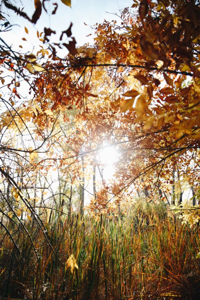 sunlight shines through tree leaves and grass