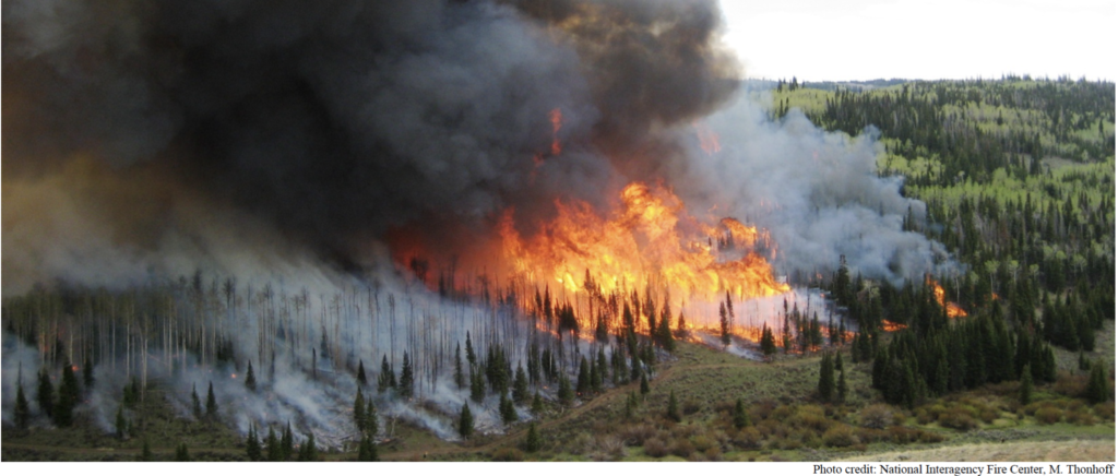 image of forest fire